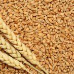 Anaaj Kharid Portal Punjab Crop Farmer Online Registration